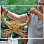 bucătăria portugheză dancing lobster