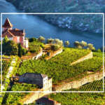 vinurile portugheze