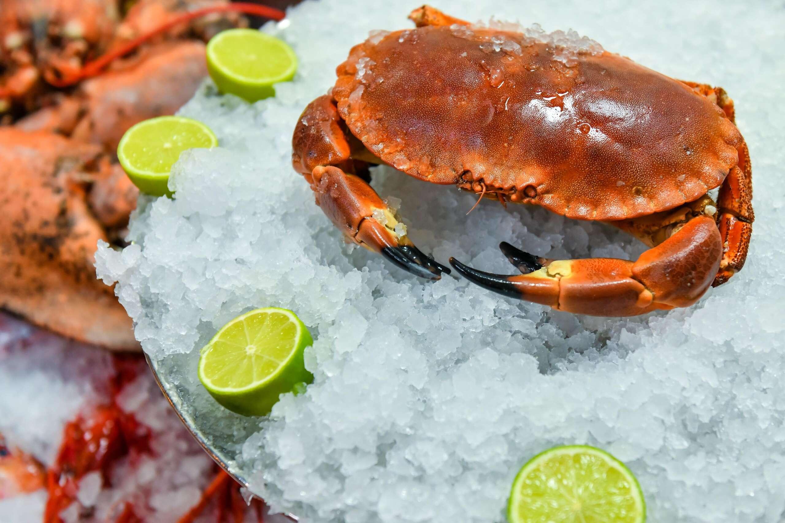 Crab brun Dancing Lobster